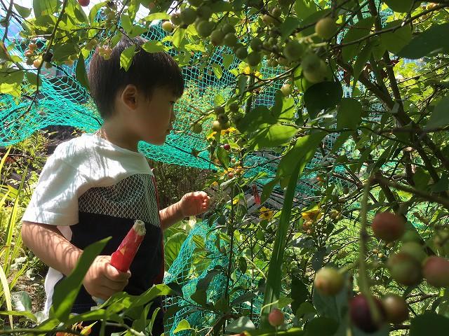 リノベーション 京都 夏休み1