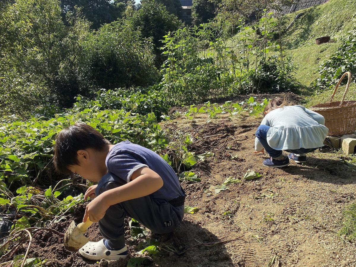 田舎で野菜の収穫1